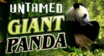 гигантская панда слот