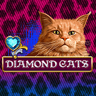 amatic/DiamondCats