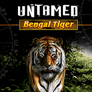 quickfire/MGS_UNTAMED_BENGAL_TIGER