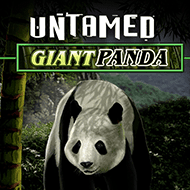 quickfire/MGS_Untamed_Giant_Panda