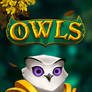 nolimit/Owls